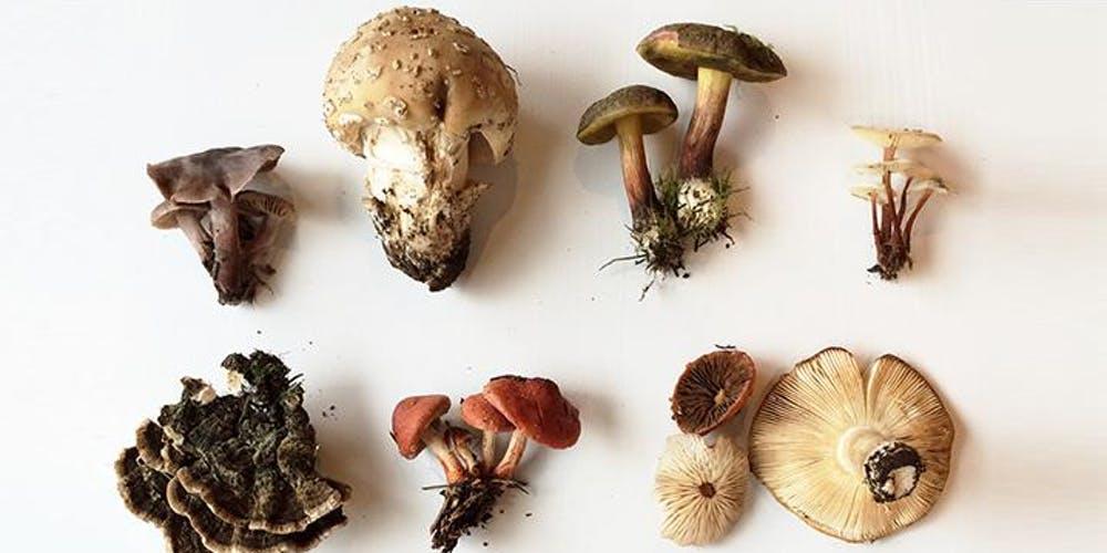 Mushrooms_health_benefits