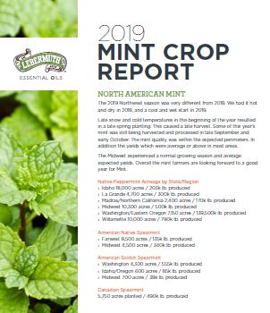 mint report-1
